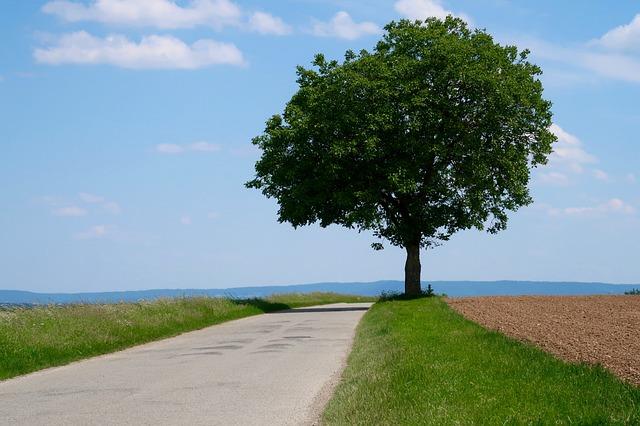 le chemin de l'autonomie